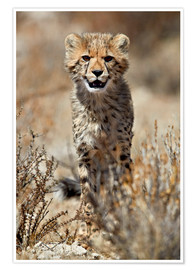 Premium poster  Cheetah cub - James Hager