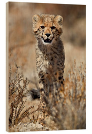 Wood print  Cheetah cub - James Hager