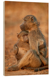 Wood print  Baboon consoles a baby - James Hager