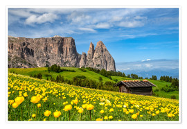 Premium poster  Spring on the Alpe di Siusi in South Tyrol - Achim Thomae