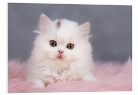 Foam board print  British longhair cat baby in white - Janina Bürger