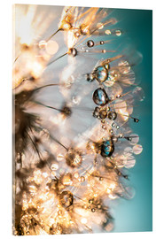 Acrylic glass  Dandelion summer happiness in turquoise gold - Julia Delgado