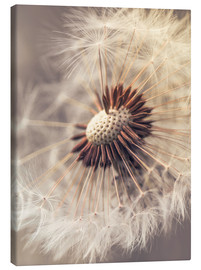 Canvas print  Dandelion closeup - Julia Delgado