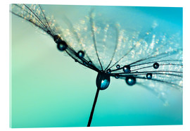 Acrylic print  Dandelion umbrella turquoise with morning dew - Julia Delgado