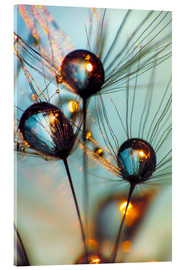 Acrylic print  Dandelion umbrella with large dew drops - Julia Delgado