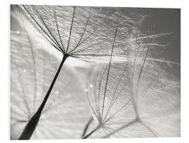 Foam board print  Dandelion Umbrella in black and white - Julia Delgado