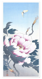 Premium poster Peony with butterfly