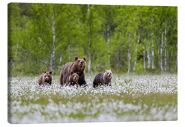 Canvas print  Bear family - Moqui, Daniela Beyer