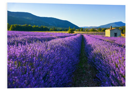 Foam board print  Lavender field with hut - Jürgen Feuerer