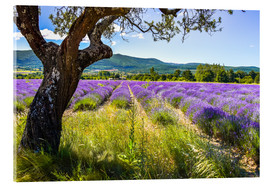 Acrylic print  View of the lavender field - Jürgen Feuerer