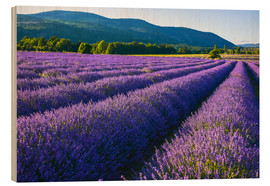 Wood print  Lavender dream of Provence - Jürgen Feuerer