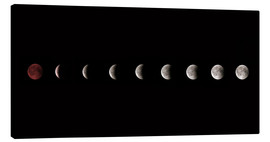 Canvas print  Moon phases 2018 - WildlifePhotography