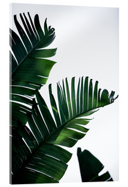 Acrylic glass  Palm Leaves 16 - Mareike Böhmer Photography