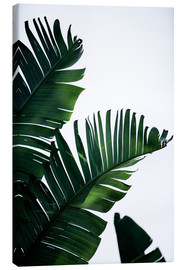 Canvas print  Palm Leaves 16 - Mareike Böhmer