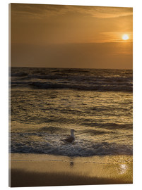 Acrylic print  Seagull in the sunset - Heiko Mundel