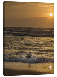 Canvas print  Seagull in the sunset - Heiko Mundel