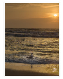 Premium poster  Seagull in the sunset - Heiko Mundel