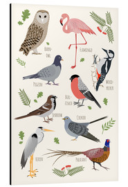Aluminium print  Bird Species - English - Kidz Collection