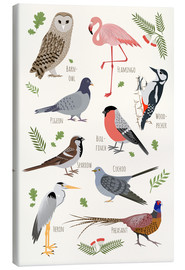 Canvas  Bird Species - English - Kidz Collection
