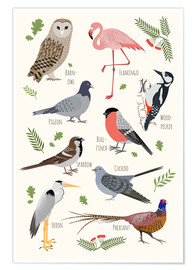 Premium poster  Bird Species - English - Kidz Collection