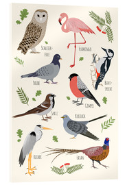 Acrylic print  Bird species (German) - Kidz Collection