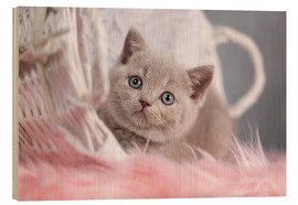 Wood print  British Shorthair kitten - Janina Bürger