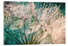 Acrylic print  Dandelion dropper dream - Julia Delgado