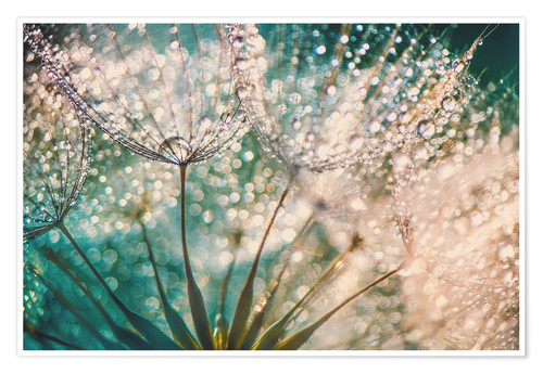 Premium poster Dandelion dropper dream