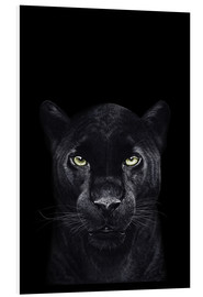 Foam board print  Black panther on a black background - Valeriya Korenkova
