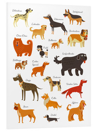 Foam board print  Dogs in all sizes - Kidz Collection