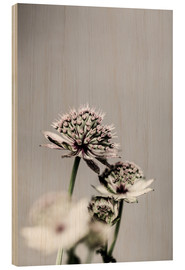 Wood print  Delicate leek blossoms - Mareike Böhmer Photography