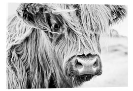 Acrylic glass  Highland cattle - gentle look - Art Couture