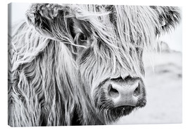 Canvas  Highland cattle - gentle look - Art Couture