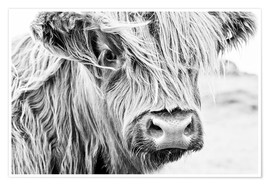 Premium poster  Highland cattle - Art Couture