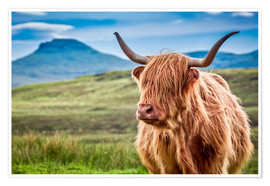 Premium poster Highland cattle, Scotland