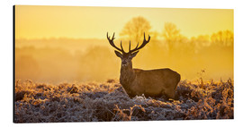 Alu-Dibond  Deer in the autumn forest - Art Couture