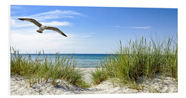 Foam board print  Seagull flight over sand dunes, Baltic Sea - Art Couture