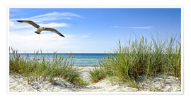 Premium poster  Seagull flight over sand dunes, Baltic Sea - Art Couture