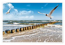 Premium poster  Seagulls, Sylt - Art Couture