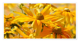 Premium poster Yellow summer meadow