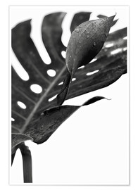 Poster  Black monstera 02 - Art Couture