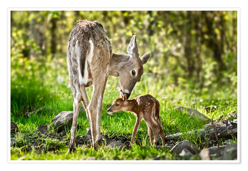 Premium poster Mother and foal